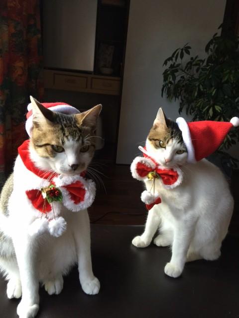 Judyさんの猫たち